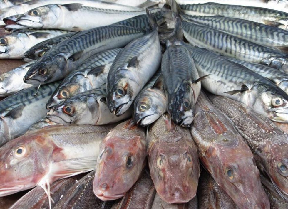 Global Fish Stocks Depleted to 'Alarming' Levels