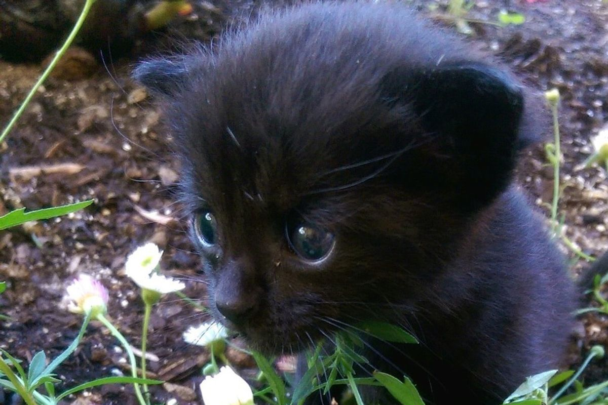 Tiny Orphaned Kitten Squeaks Her Way into Her Rescuer's Heart