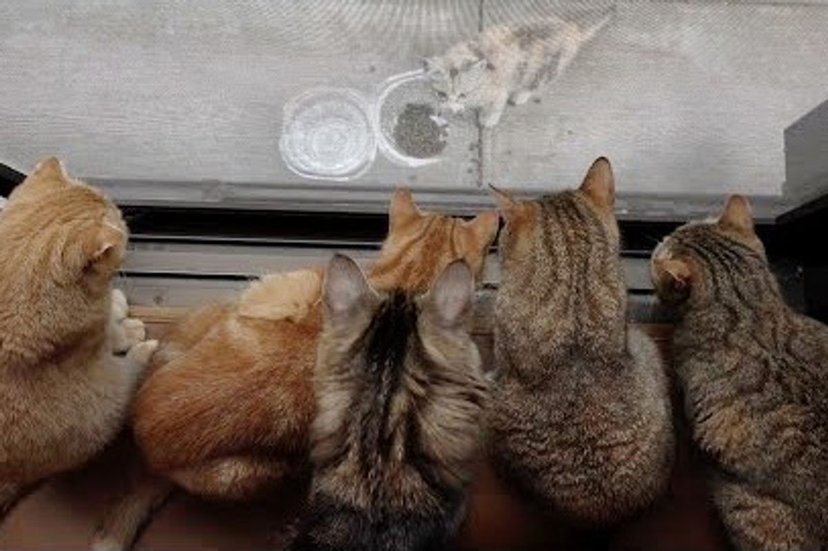 10 Cats Can't Stop Watching a Neighborhood Stray