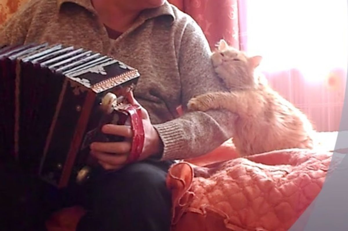 Cat Hugs and Kisses His Human When He Plays Accordion Just for Him