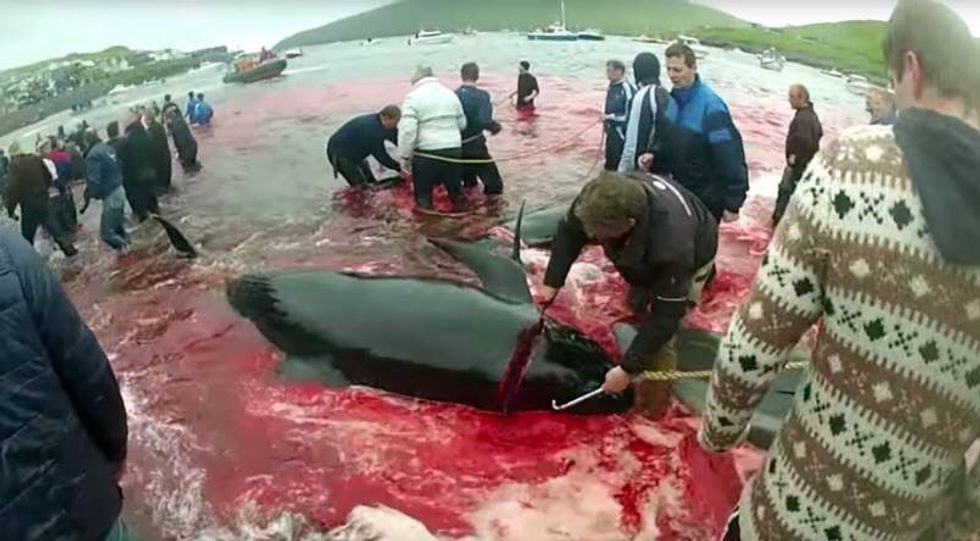 Hollywood Stars Demand Costco Stop Selling Faroe Islands' Salmon