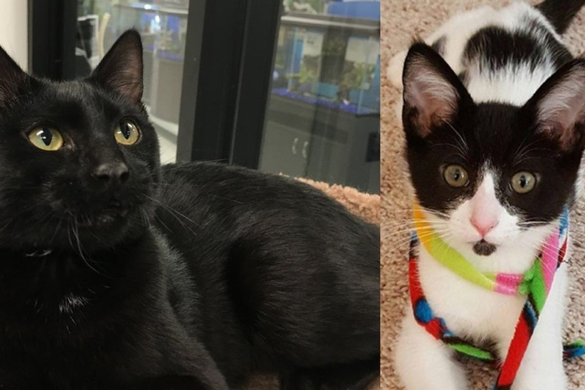 Couple Adopts Shelter Cat, Then Goes Back for His Best Friend