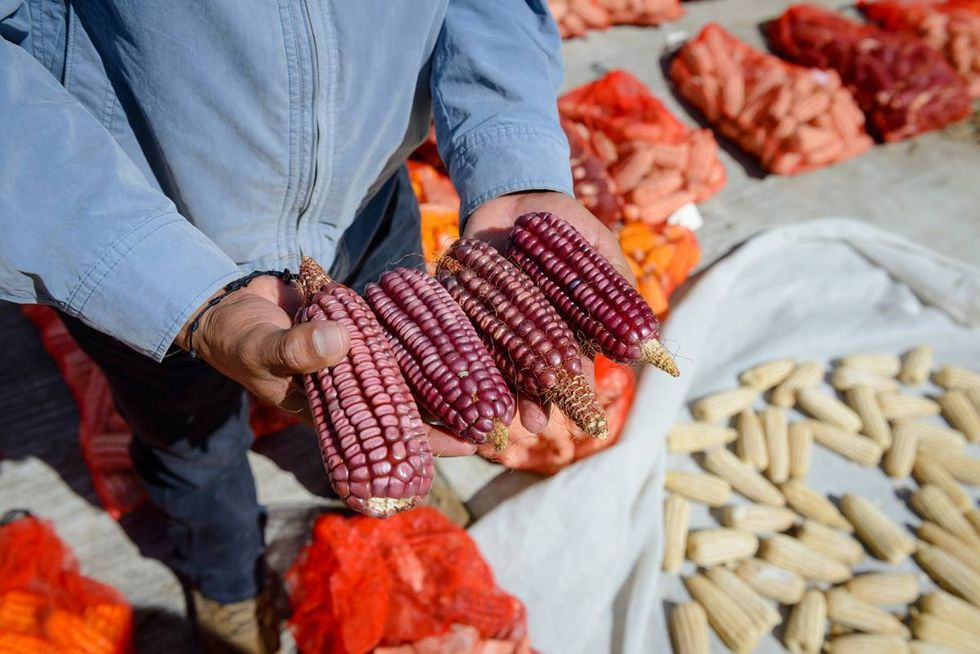 Heirloom Non-GMO Corn Is Helping Sustain Mexico's Heritage and Farmers