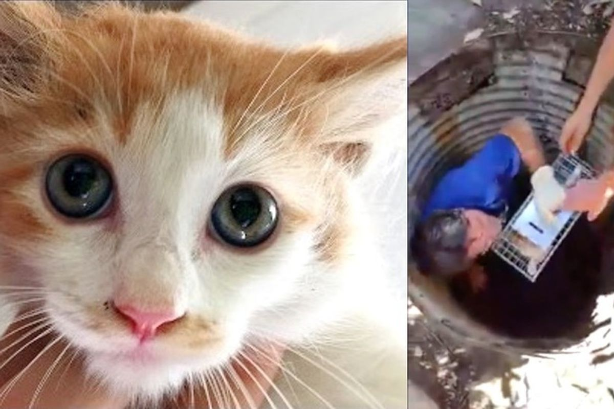 People Band Together to Save Kitten Trapped in Drain for Nearly 100 Hours