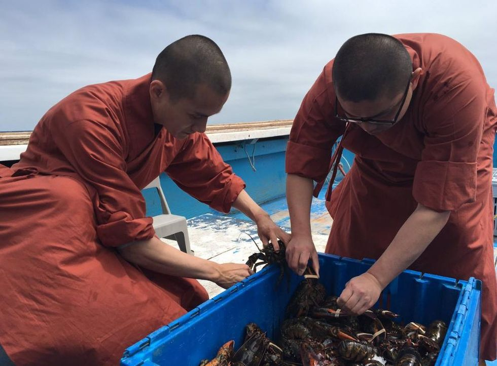 Buddhist Monks Return Hundreds of Lobsters Back to the Sea