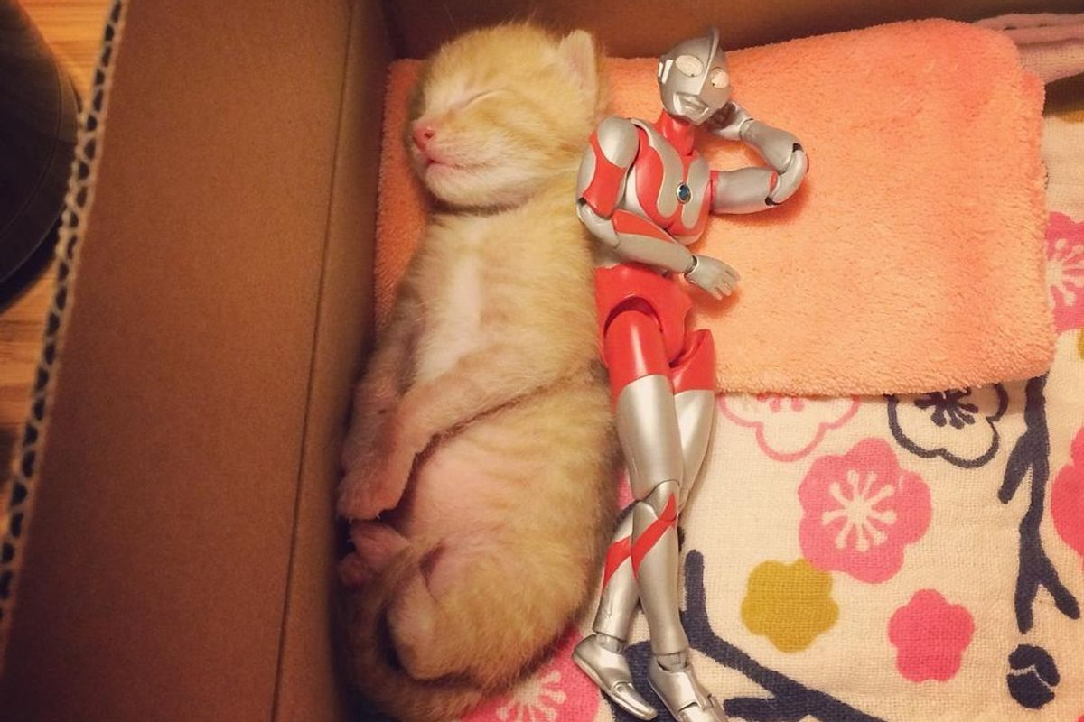 Family Saves 3-day-old Kitten and Gives Him an Unusual Friend to Grow Up with