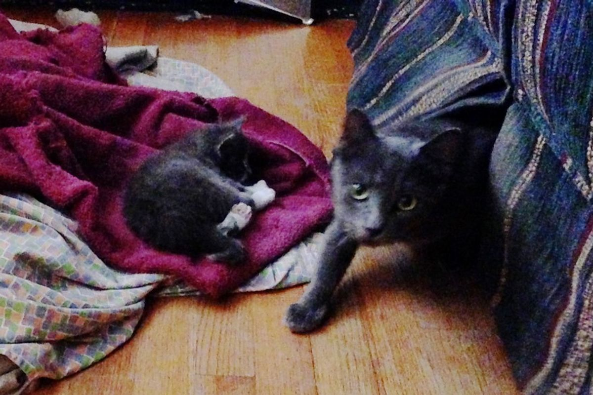 Man Saves 3 Kittens from Drowning During Storm and Reunites Them with Their Mama