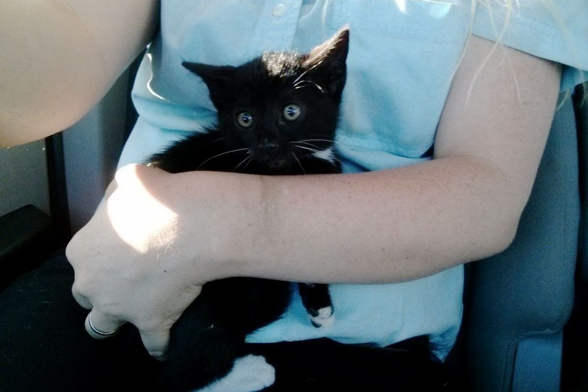 Stray Kitten Saved from Highway Doesn't Want to Stop Cuddling