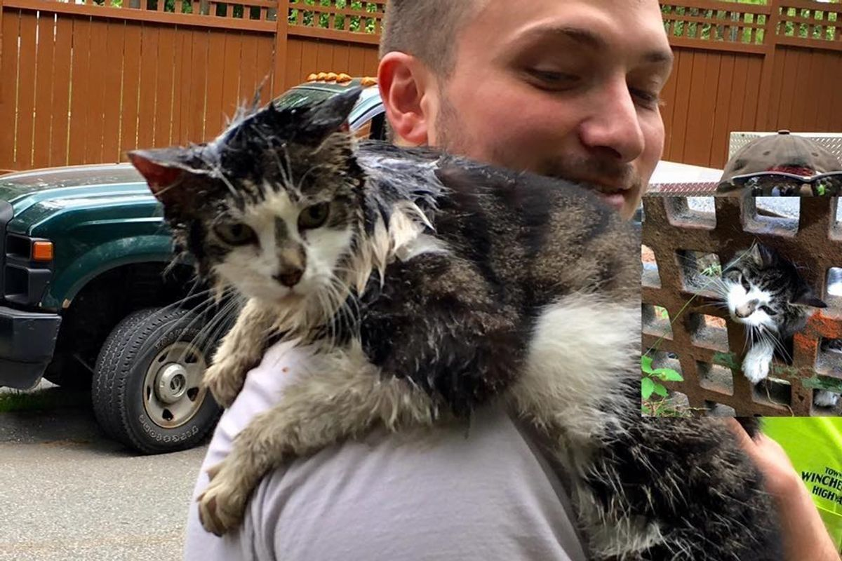 Cat Grateful to Be Saved from Being Stuck in Grate
