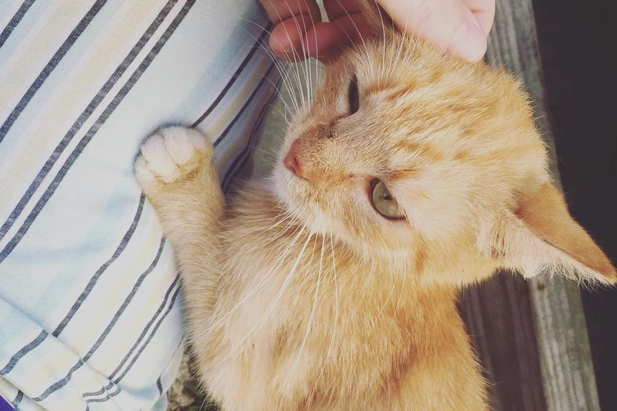 Stray Cat Comes to Family's Porch and Chooses 4-year-old Boy to Be Her Forever Human