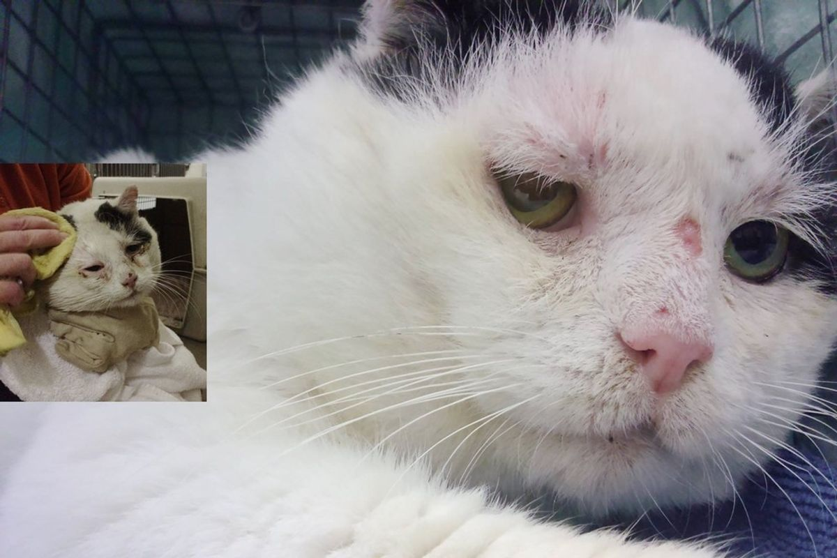 Semi-feral Cat Finds a Home with Other Kitties Like Him After Years Fending for Himself