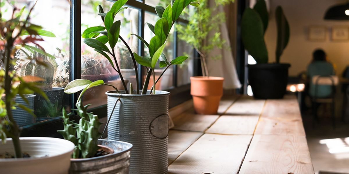20 Plants That Improve Air Quality in Your Home - EcoWatch on beautiful houseplants, easy houseplants, replanting houseplants,