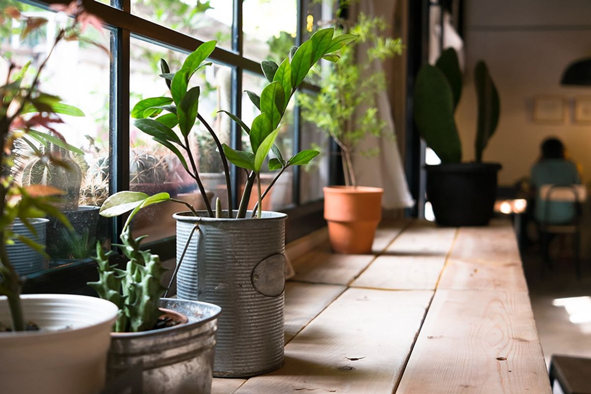 20 Plants That Improve Air Quality in Your Home - EcoWatch on indoor spices, indoor trees, indoor organic gardening, indoor palms, indoor orchids, indoor plants, indoor ferns, indoor shrubs, indoor seedlings, indoor roses,