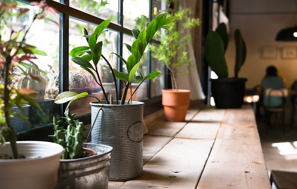 20 Best Air-Purifying Plants (And How To Keep Them Alive)