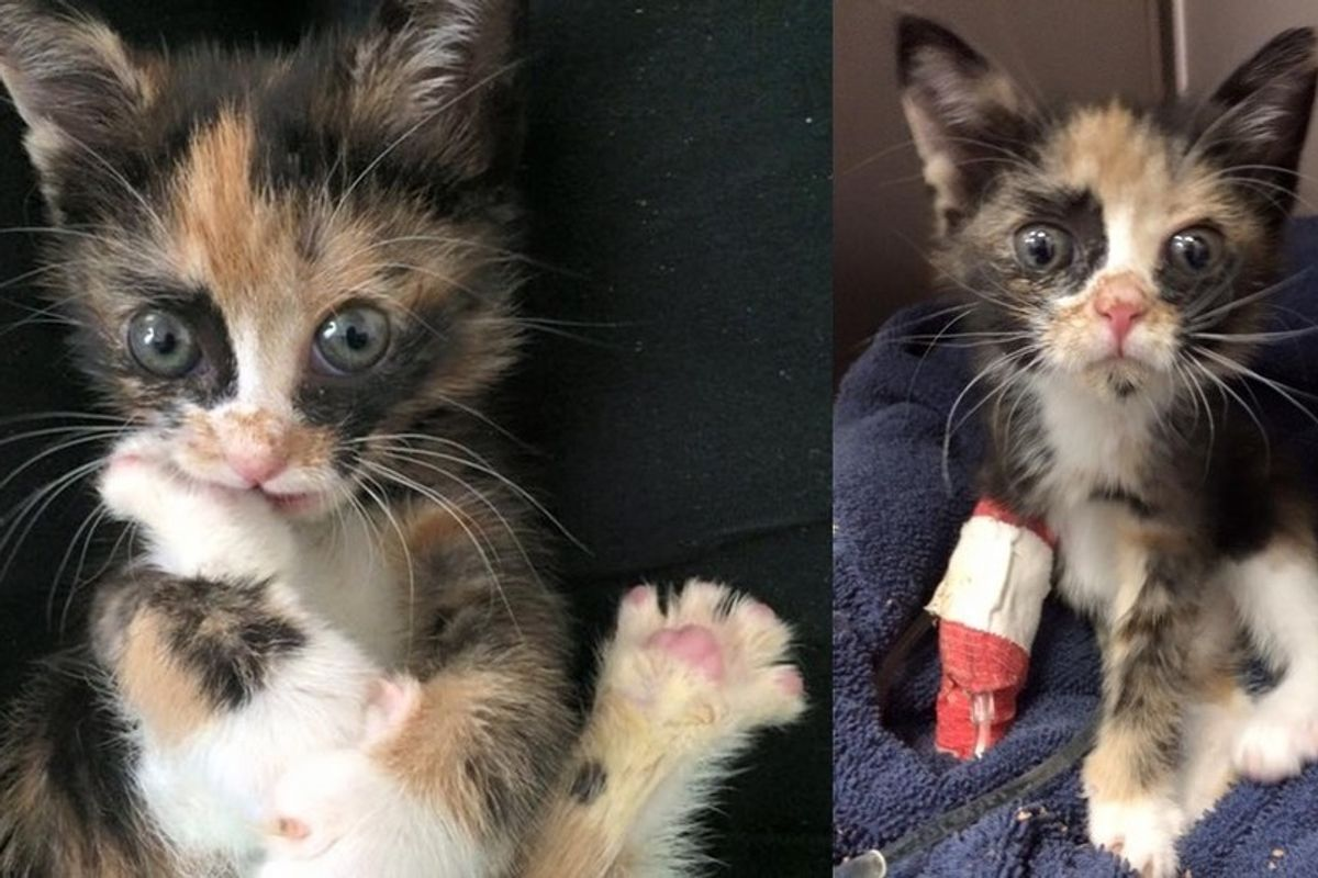 They Thought This Kitten Would Live with Tremors for Life, but She Shocks Them All
