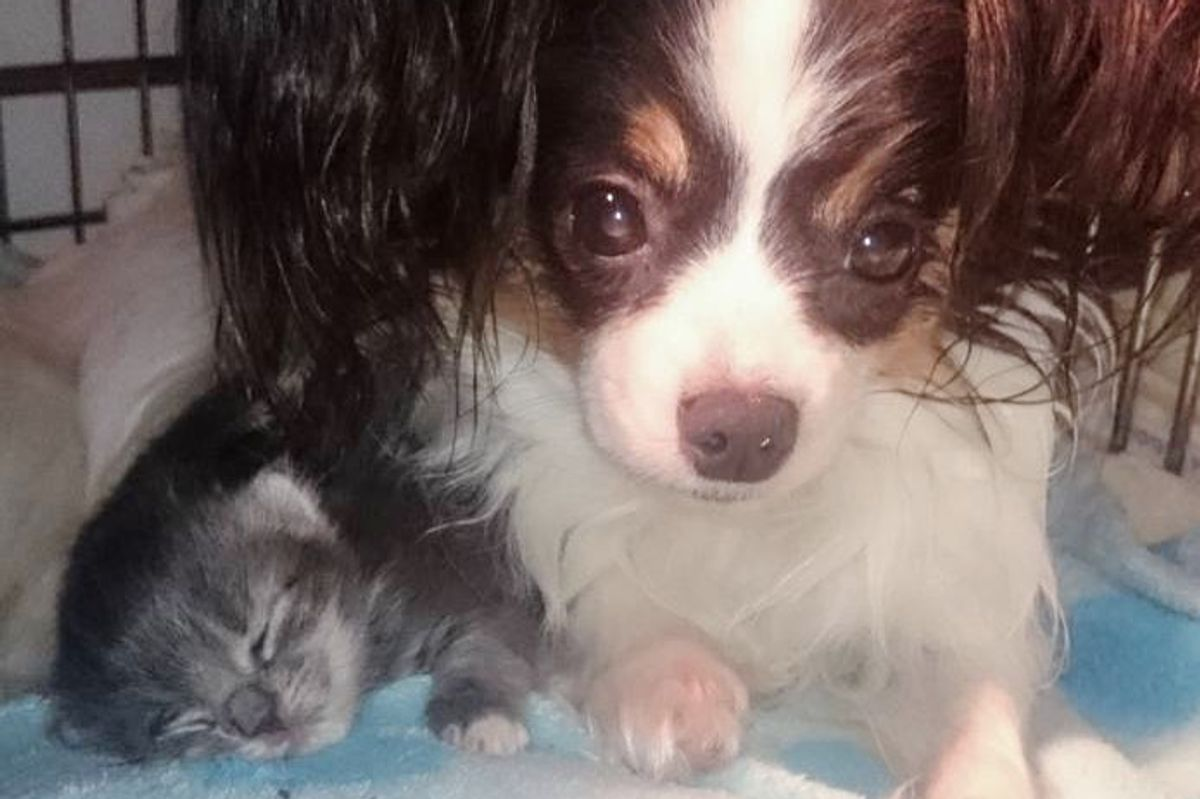 3 Orphaned Kittens Cure Mama Dog's Broken Heart After She Lost Her Only Pup