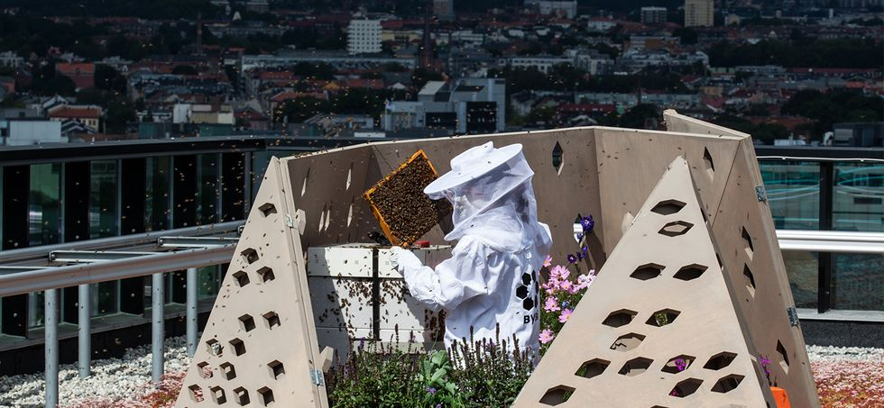 World's First Urban Bee Highway Helps Save Pollinators