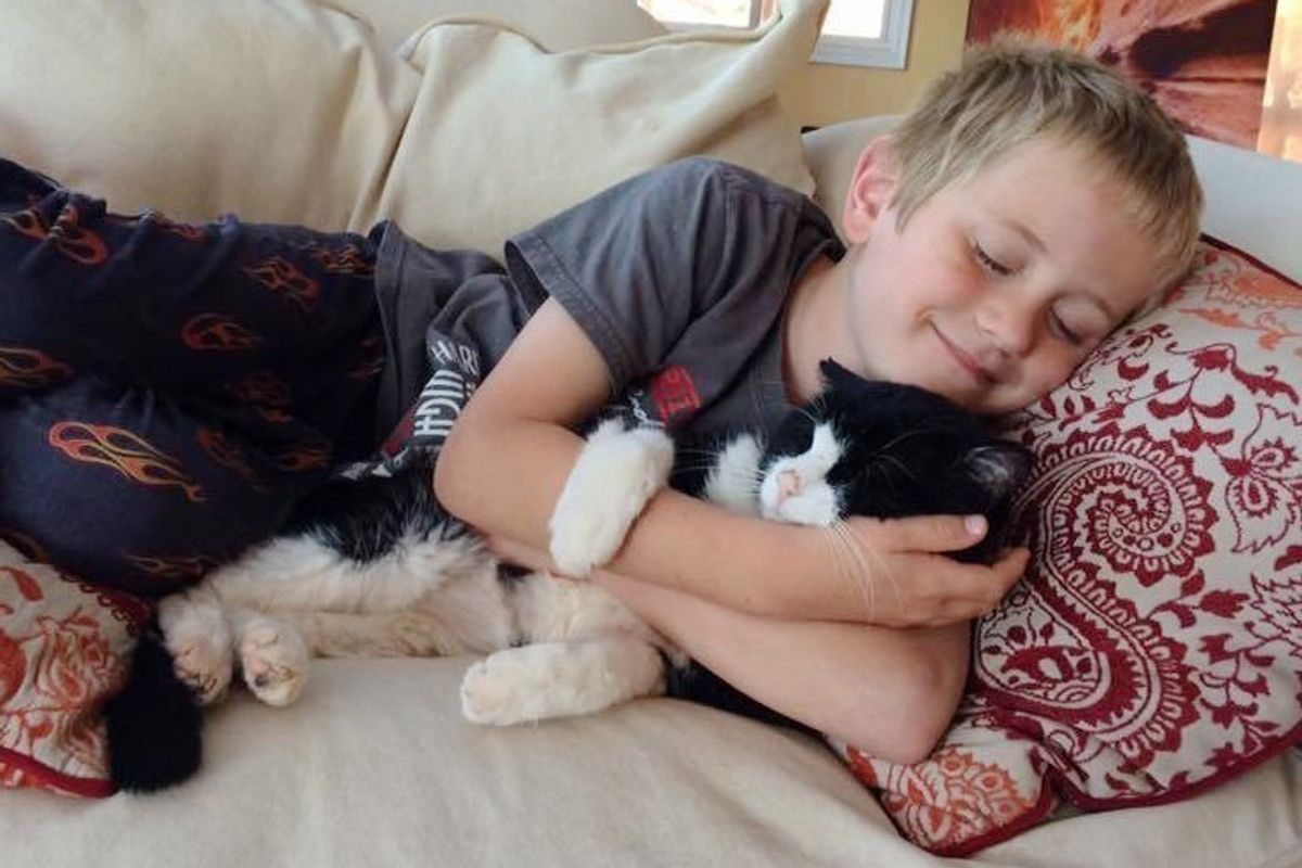 Cat Found a Home at 20, Two Years Later, He Has So Much Love to Give