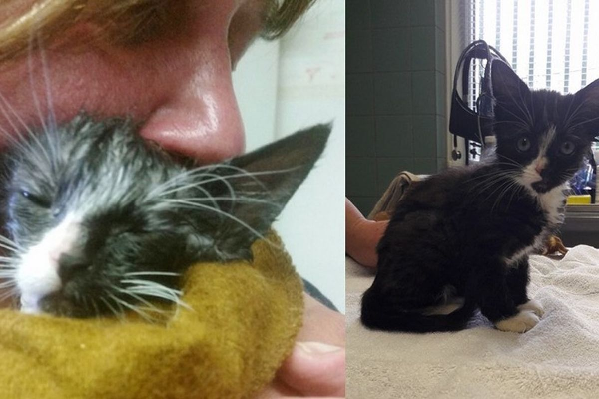 Kitten Found Covered in Glue Makes the Greatest Come Back