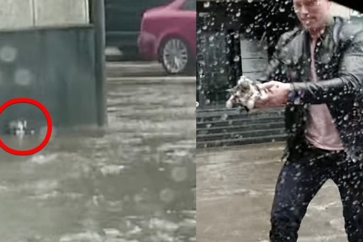 Heroic Man Rescues Kitten Stranded in Flood Waters