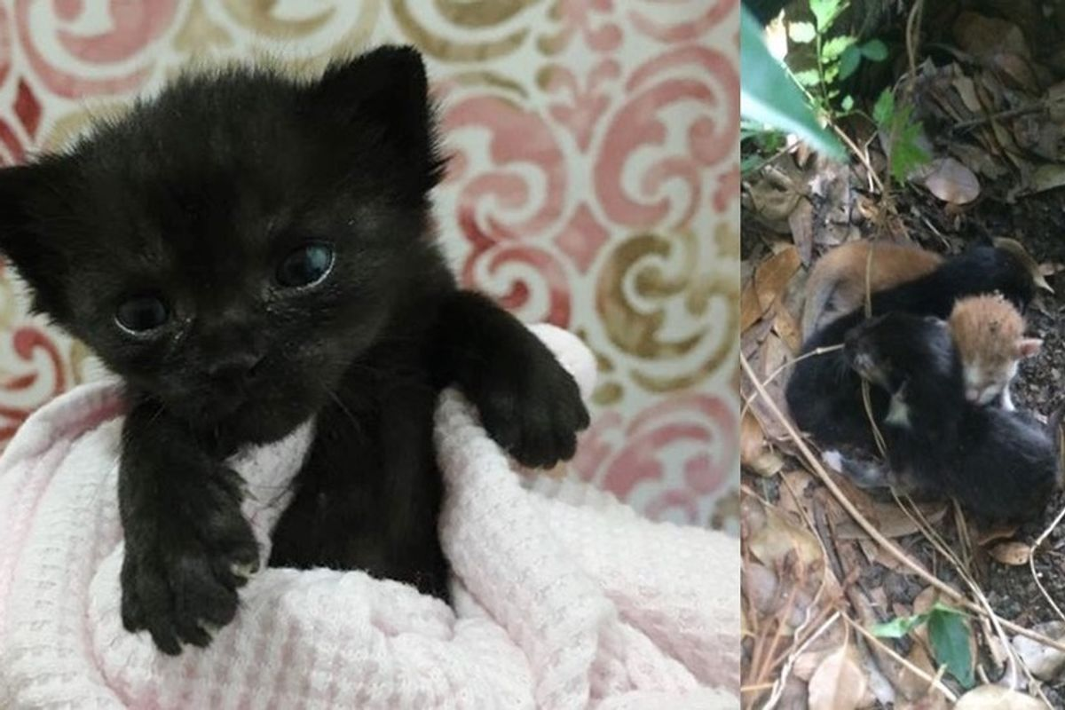 Tiny Kitten Orphaned at 3 Days Old Keeps Fighting to Live and Grow