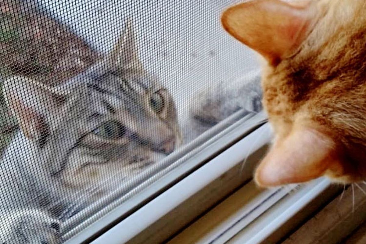 Cats Keep Showing Up on Woman's Porch Meowing for Help