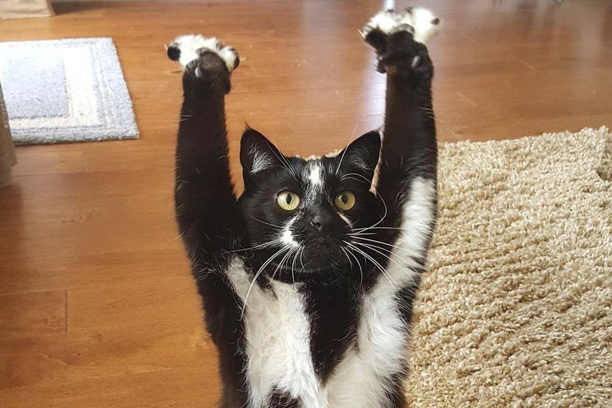 Man Discovers His Cat's Unique Talent