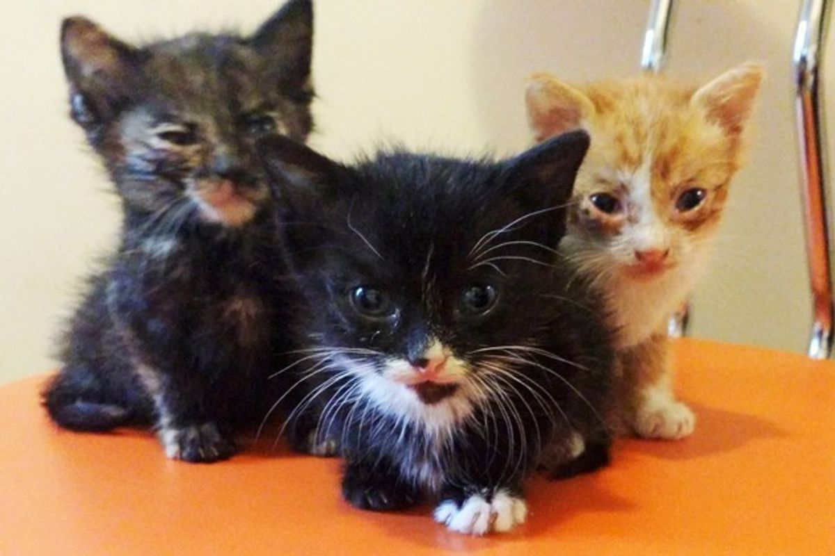 Man Saves 3 Orphaned Kittens from Pouring Rain and Becomes Their Dad