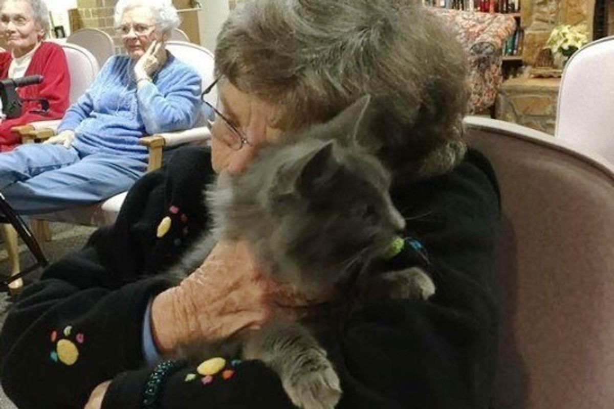 Shelter Brings Senior Cats to Senior Humans So They Can Comfort Each Other