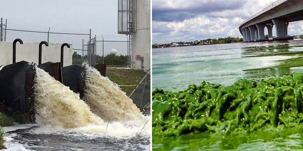 More Chemicals Allowed in Florida Waterways, Toxic Algae Blooms Continue to Spread Across State