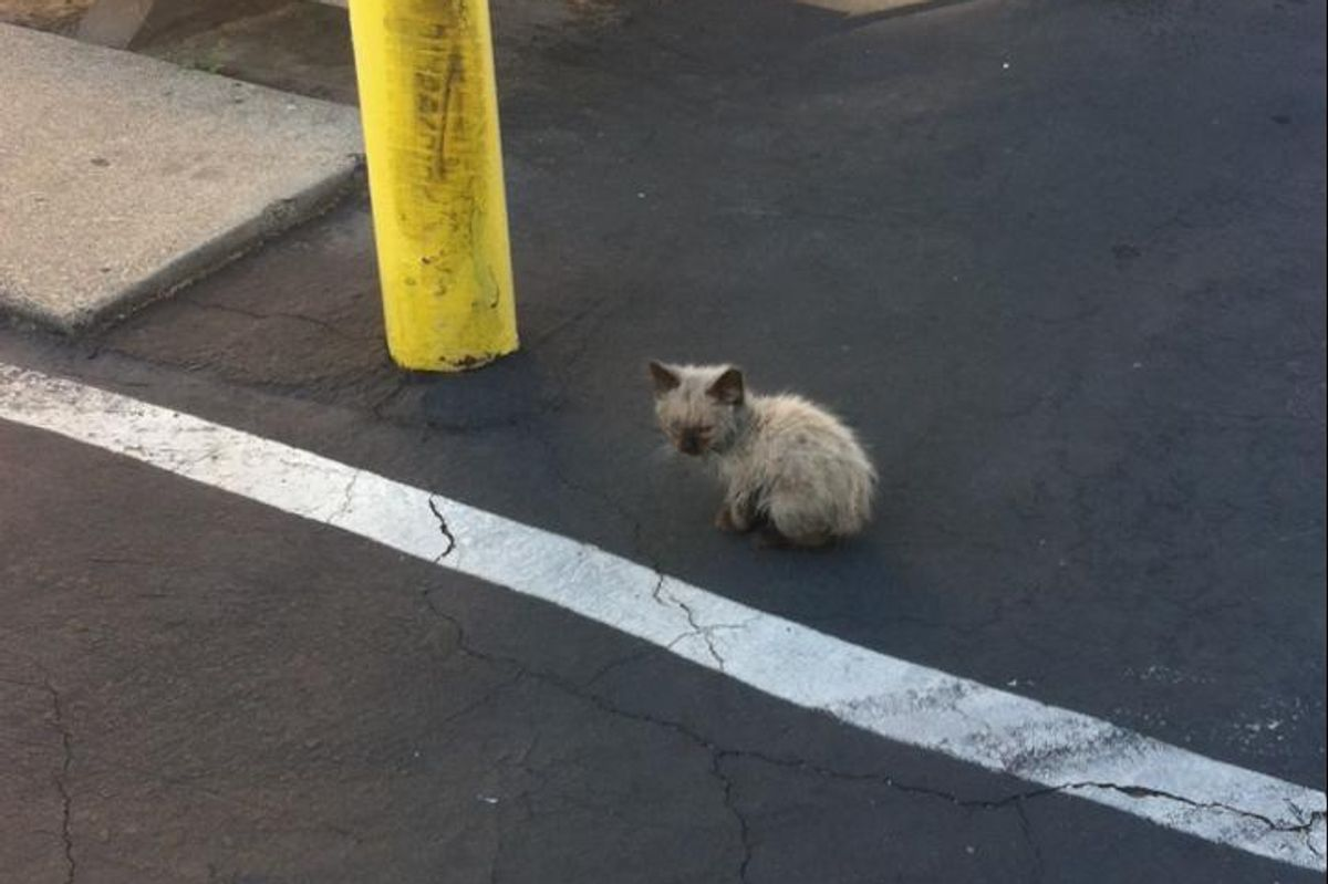 Woman Takes a Chance on a Lost Kitten, What a Difference a Day Makes.