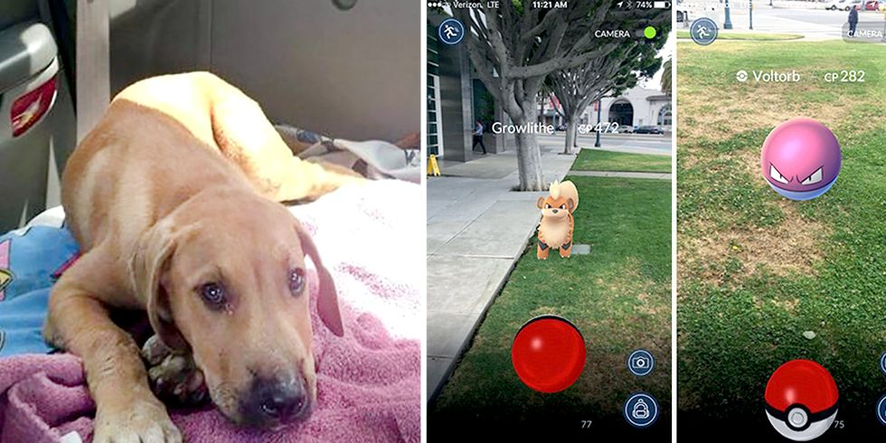 Pokémon Go Players Become Unusual Heroes for Animals