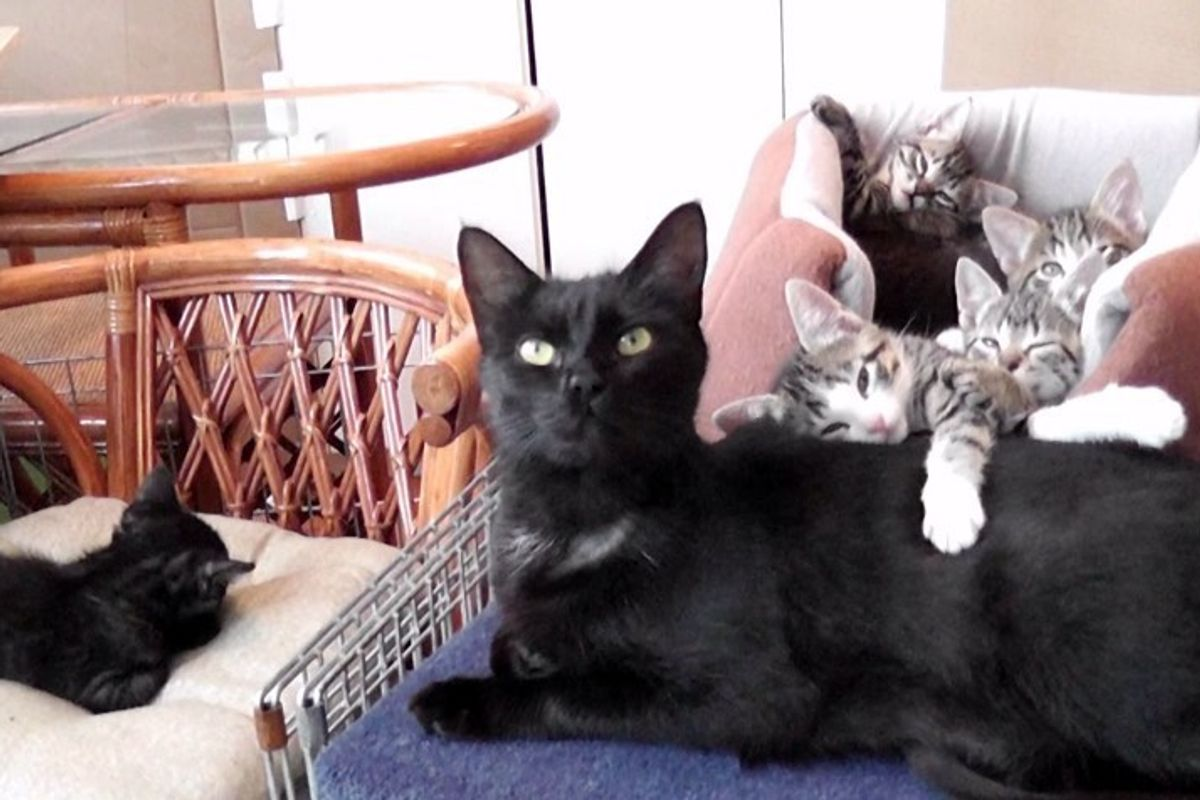Sweetest Conversation Between Mama Cat and Her Babies