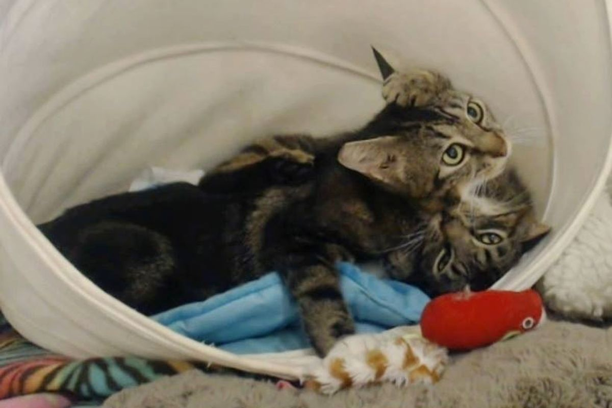 2 Feral Cats Reunited and Wouldn't Let Go of Each Other, Here's Their Love Story