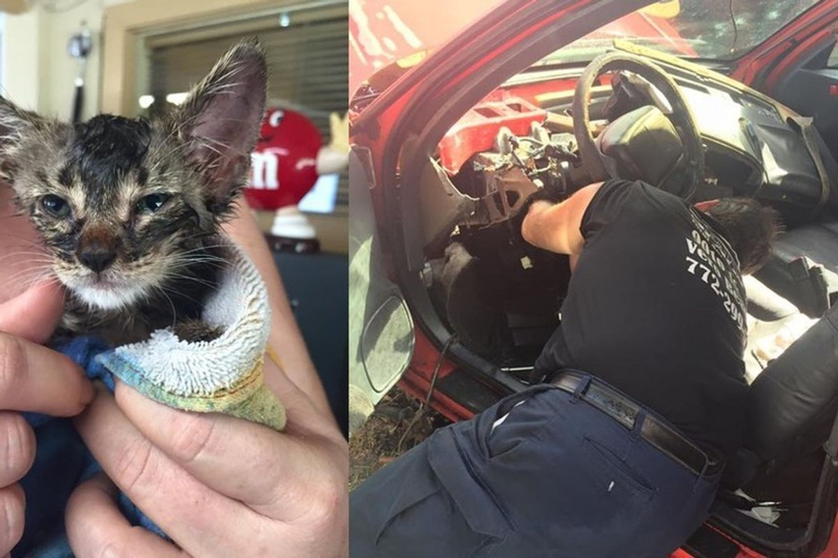 Family Destroys Their Car to Save a Kitten's Life