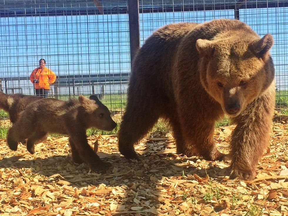13 Bears Rescued, Get a New Lease on Life