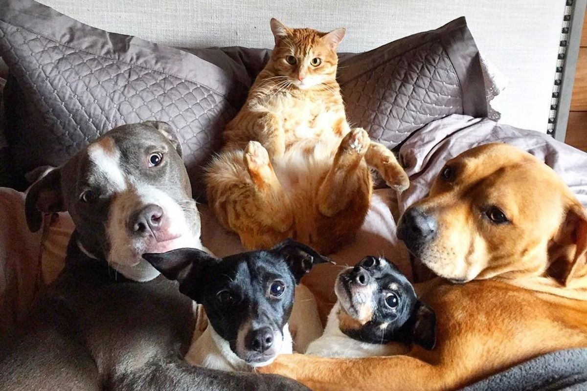 Rescue Cat Leads a Pack of 4 Dogs and 2 Ducks and Gives Them Cuddles