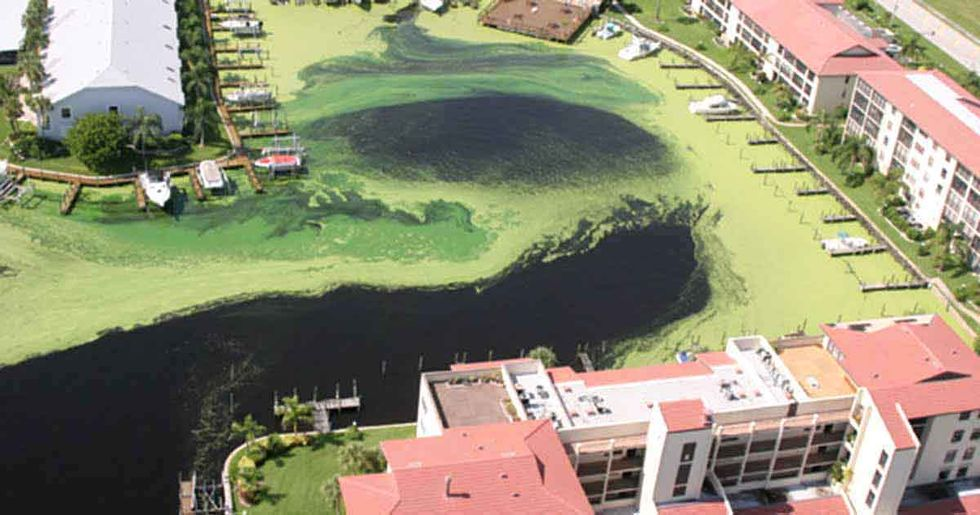 Solutions for the Toxic Algae Crisis in Florida and Beyond