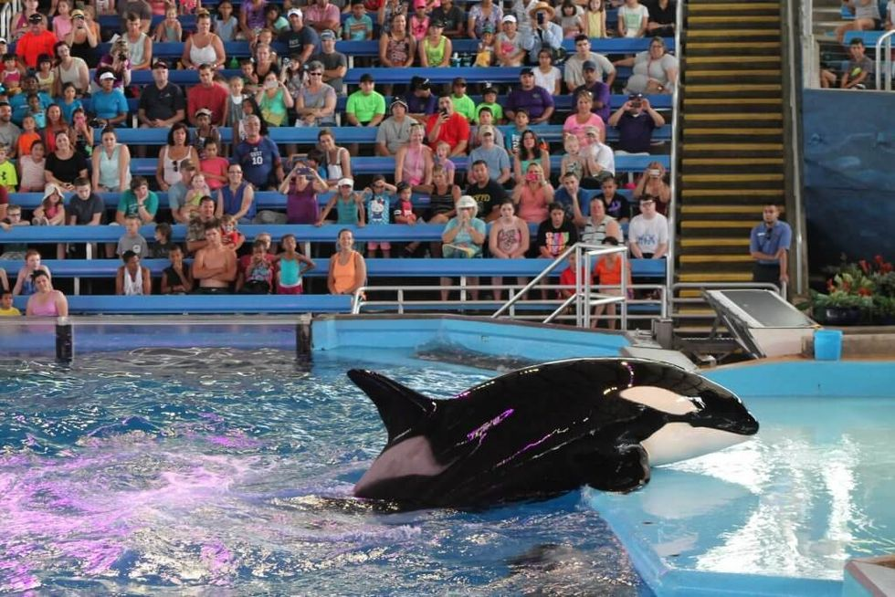 PETA Urges SeaWorld to Allow Last Orca Mother to Give Birth in Seaside Sanctuary