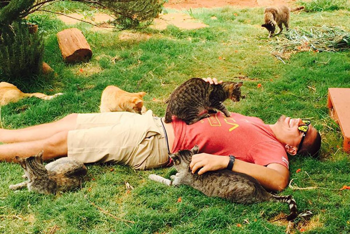 People Come from Around the World to Cuddle 500 Rescue Cats at Kitty Sanctuary