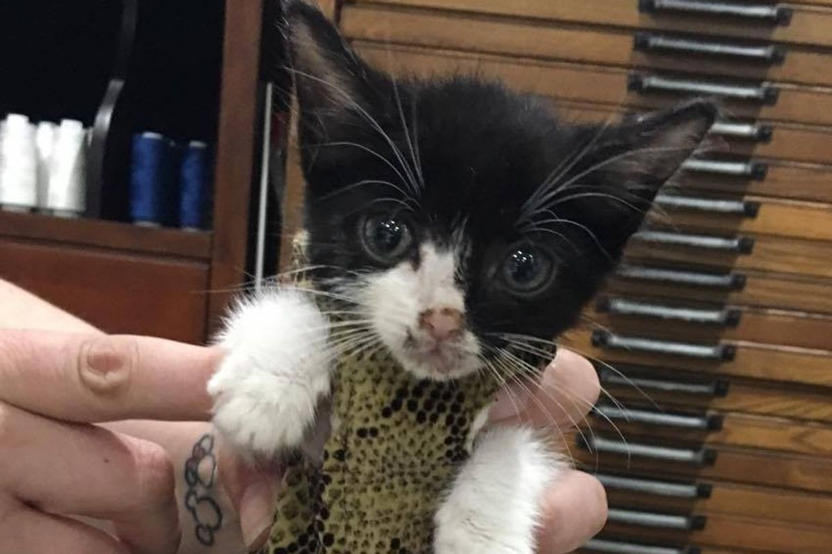 Kitty with Heart Condition Gets 'Iron Man' Suit to Protect His Heart