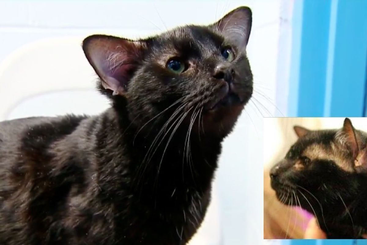 Rare Shelter Cat Found with an Extra Pair of Ears