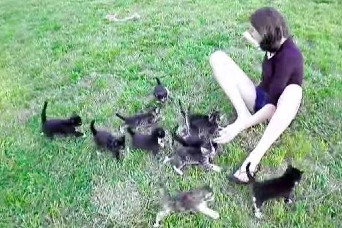 13 Little Kittens Running and Forming the Cutest Train!
