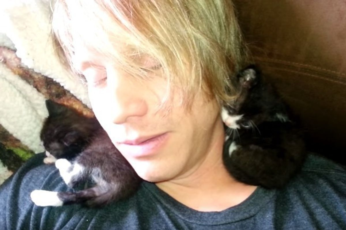 How Two Orphaned Kitties Choose Man Who Never Held a Kitten, It Changes His Life