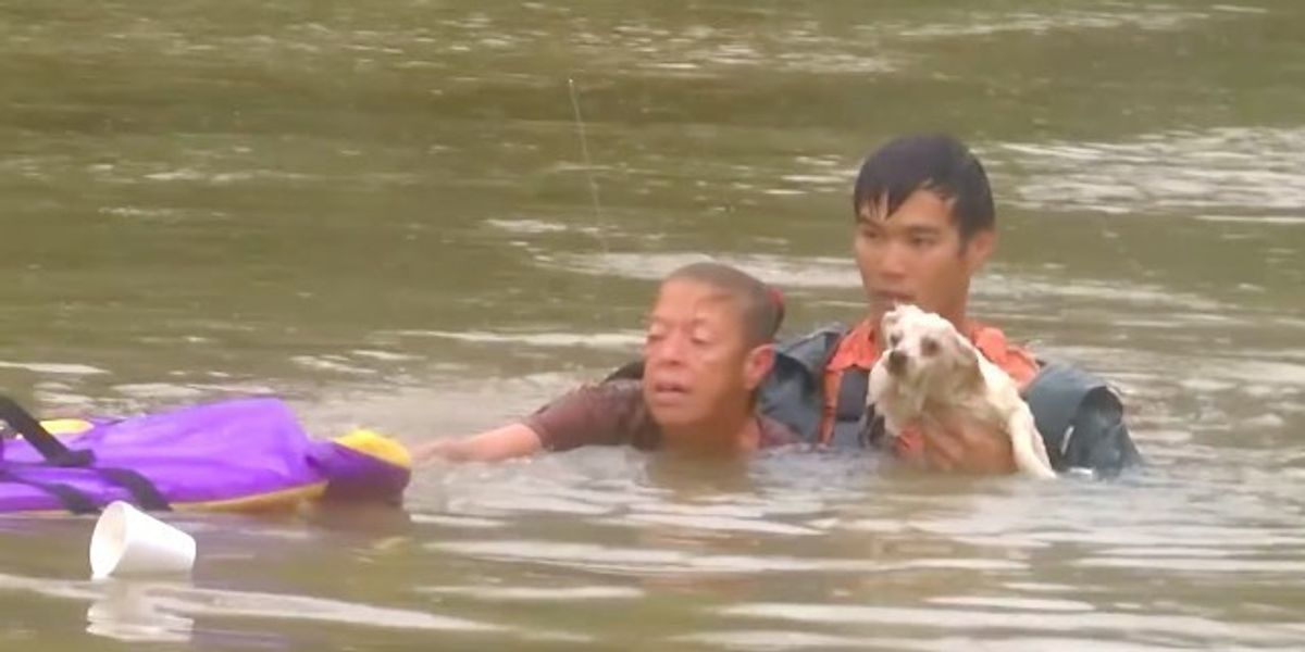 [Video] Man Rescues Woman from Sinking Car and Goes Back to Save Her Pet