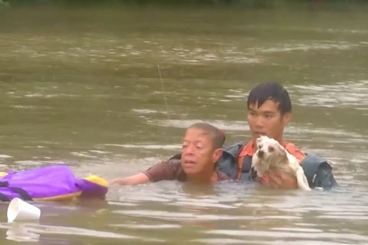 Man Rescues Woman from Sinking Car and Goes Back to Save Her Pet