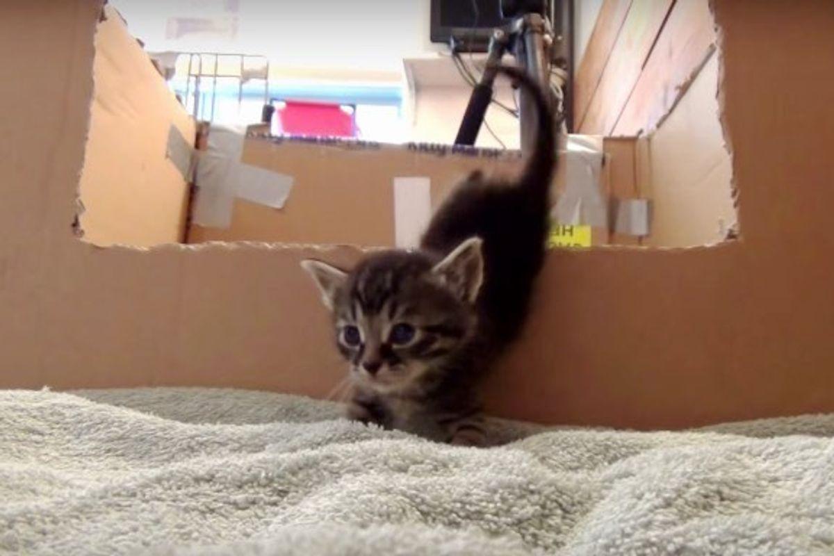 One Foster Breaks Out of Nursery Box, 5 Kittens Follow