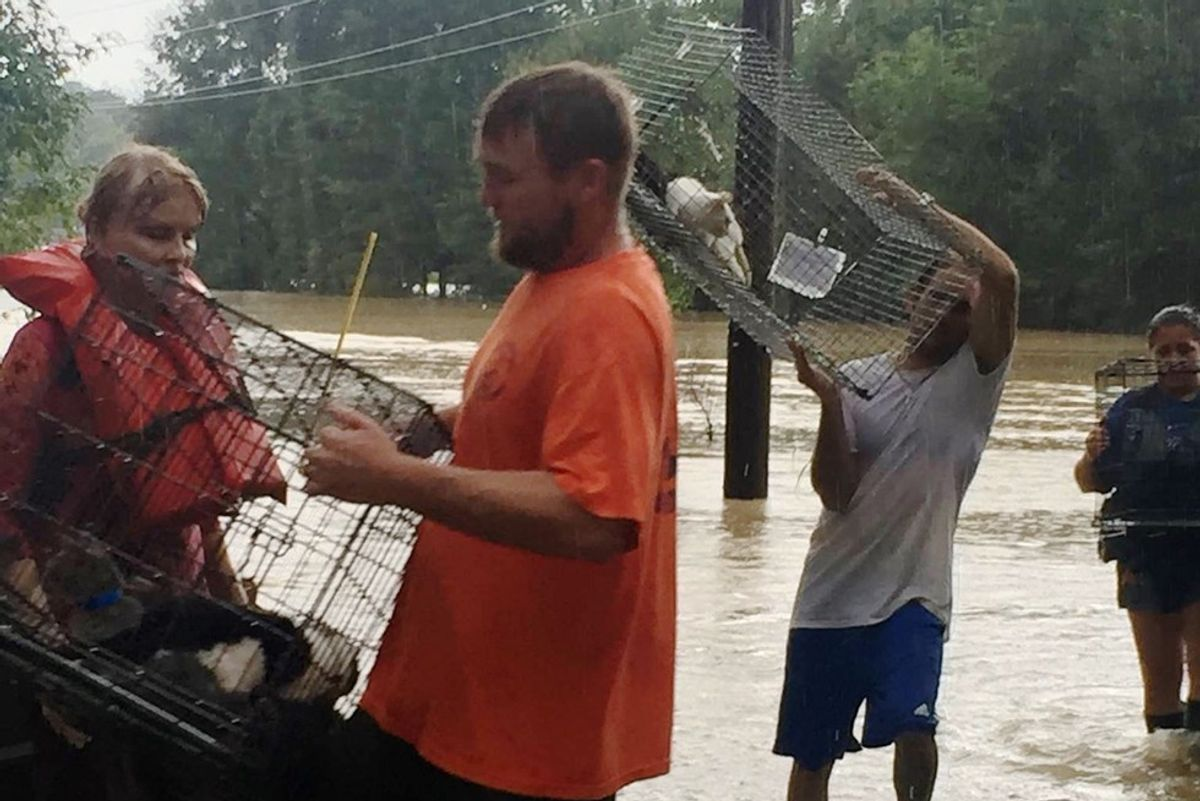 People Stay Behind to Save Animals Trapped in Devastating Louisiana Floods