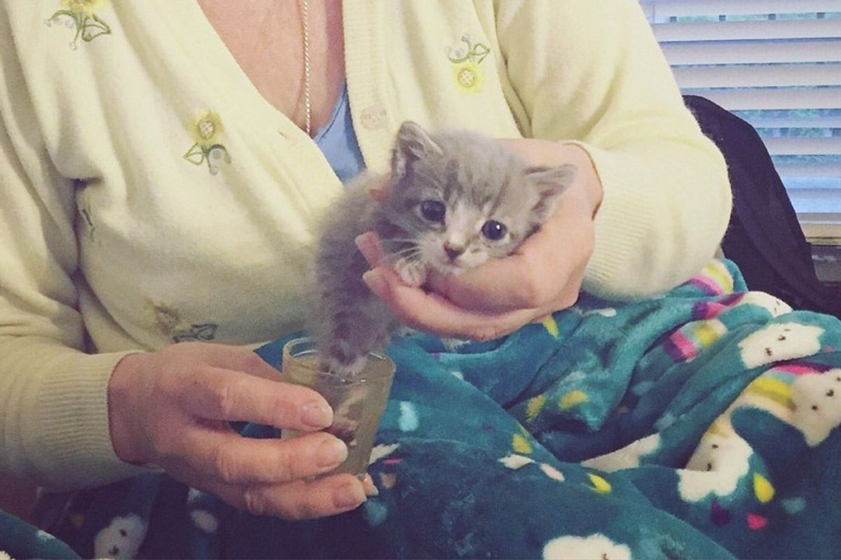 Cat Mama Begs to Be Let Back Out So She Can Lead Rescuer to Her Injured Baby