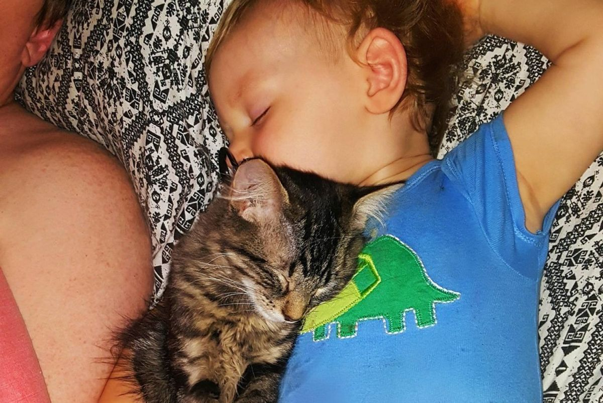 Kitten Found His Little Human, Won't Leave His Side in These Adorable Photos